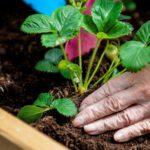 jardin et seniors - image
