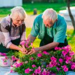 Jardinage et seniors - image