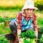 préparer son jardin à l'hiver - image
